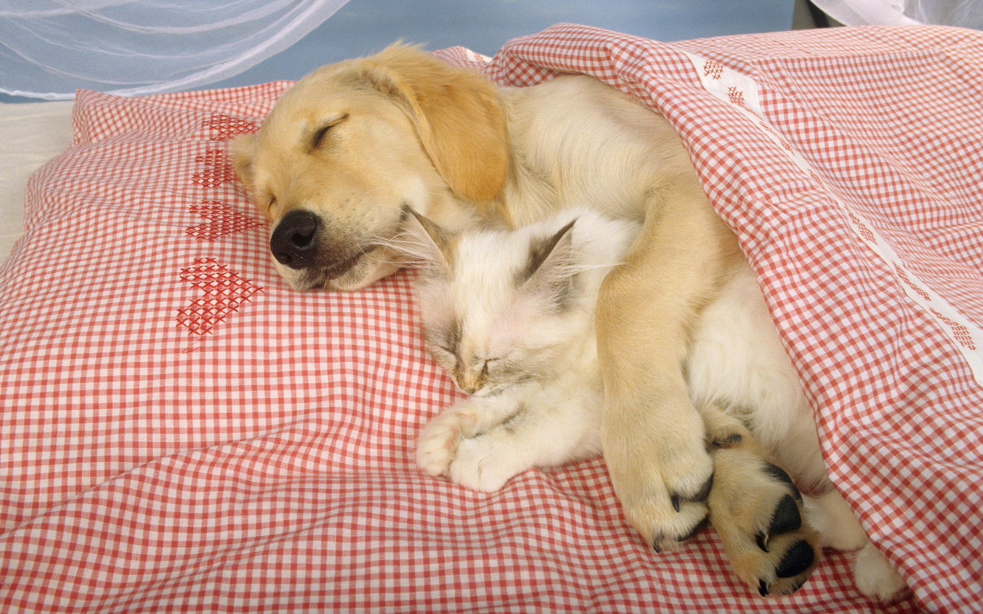 wallpaper cats and dogs