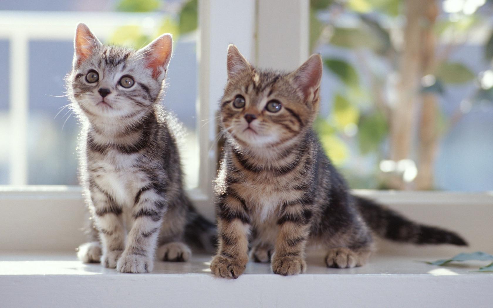 wallpaper cute cats