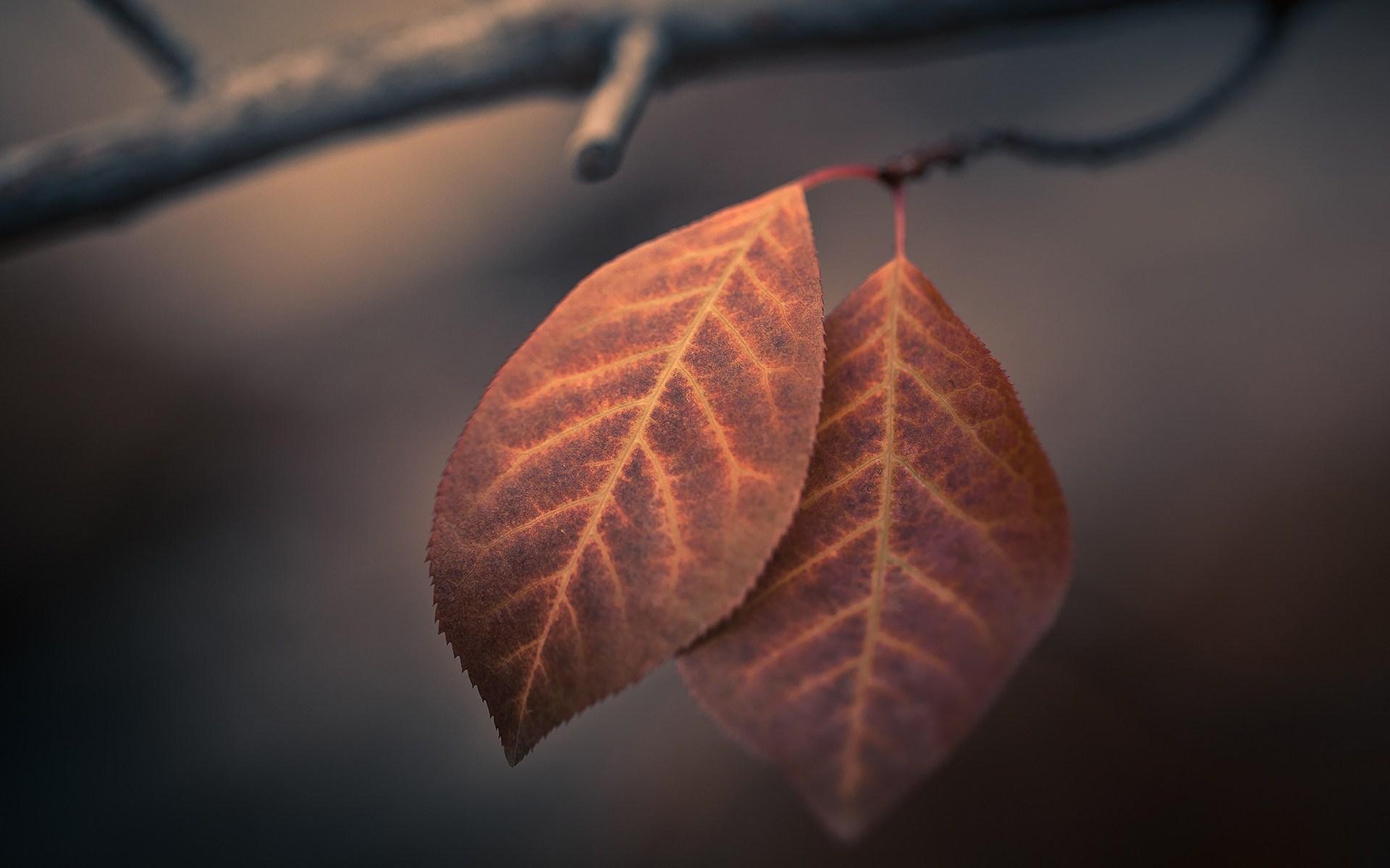 wallpaper leaves