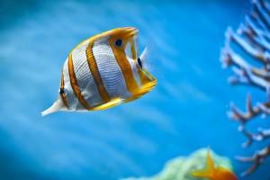 wallpaper live fish