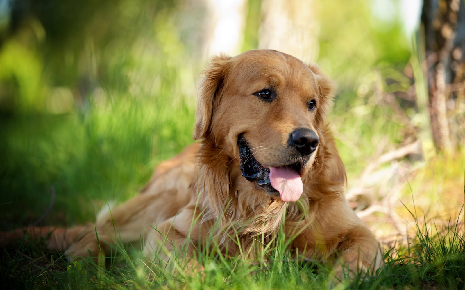 wallpaper of dogs puppy free download