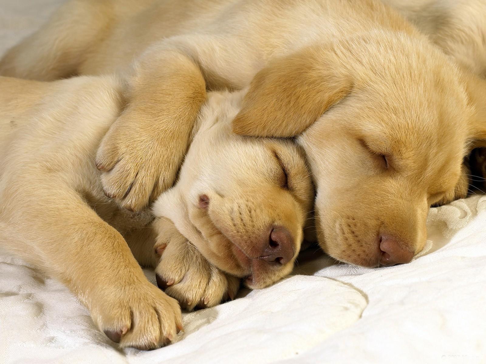 wallpaper puppies cute