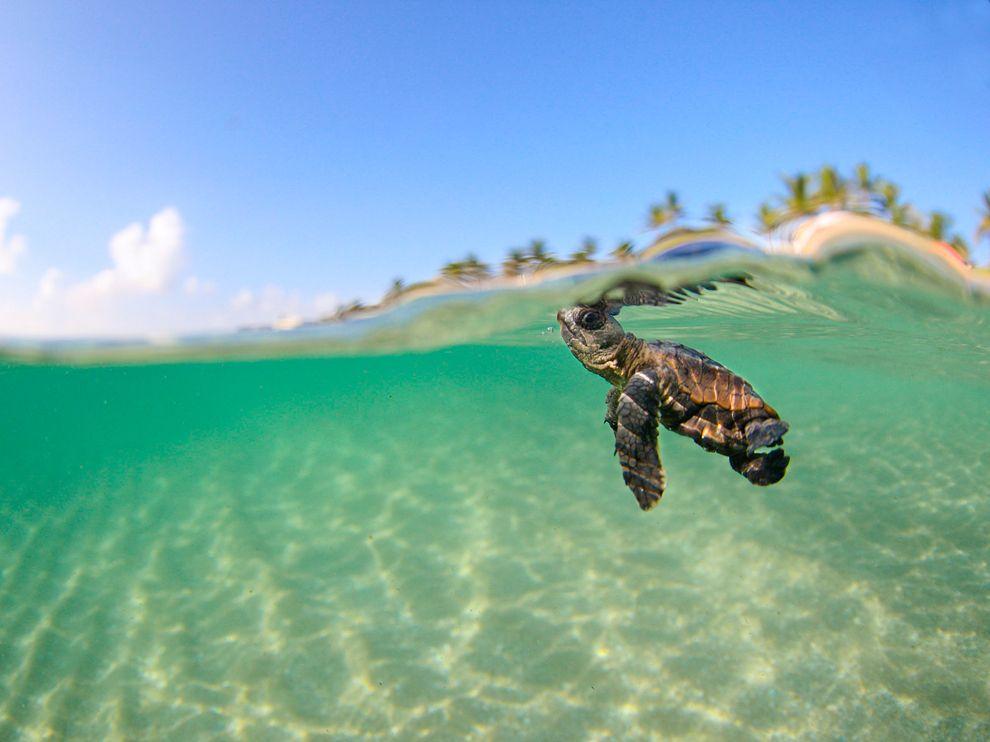wallpaper turtle