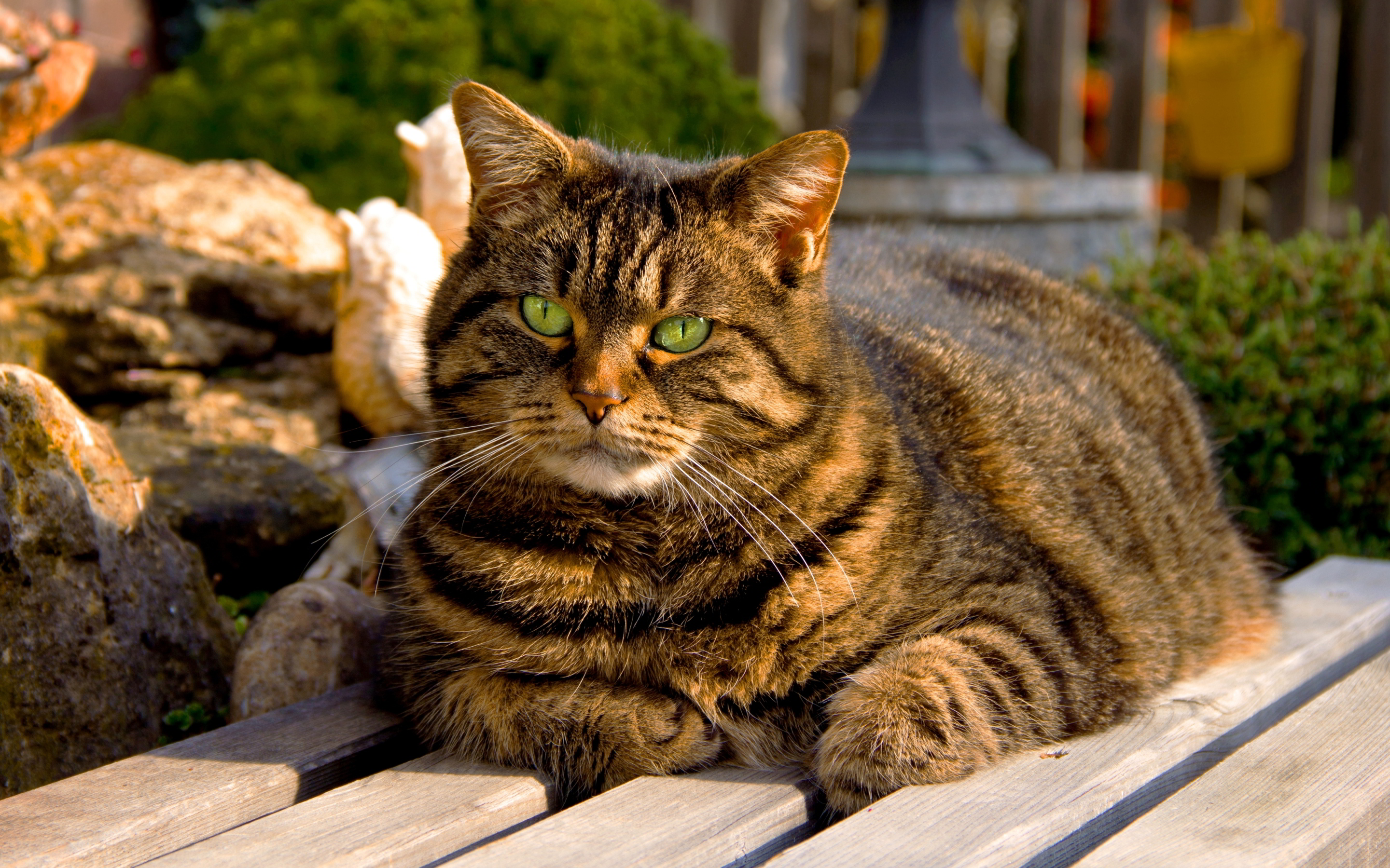 wallpapers cats hd