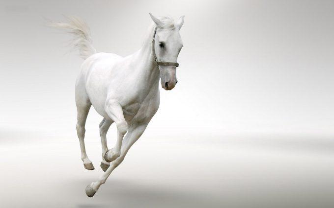 white horse beautiful