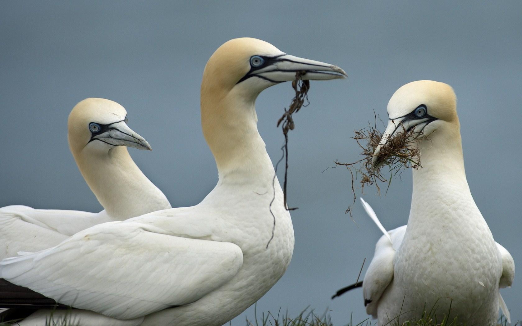 white ocean birds
