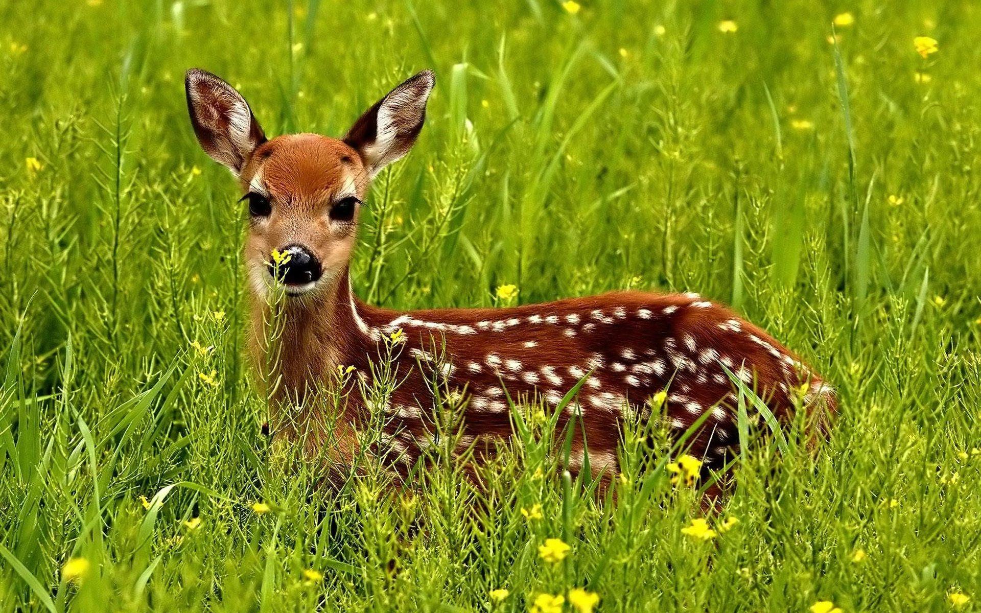 Wildlife Photography Hd Desktop Wallpapers 4k Hd