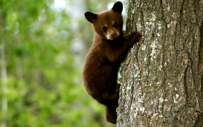 wildlife picture 1080p