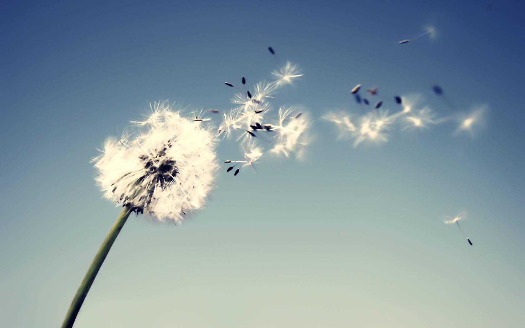 Free Nature Wind