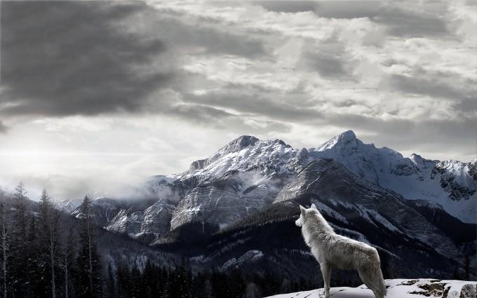 wolf wallpaper A18