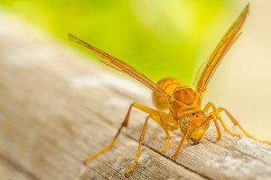 yellow wallpapers insect