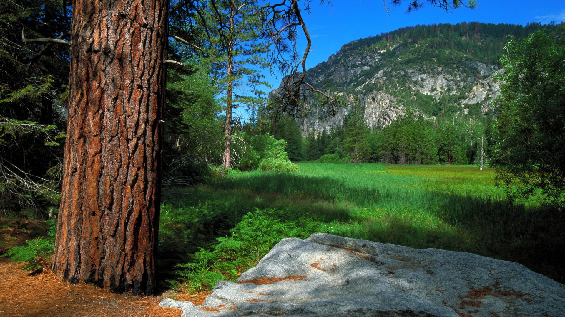 Yosemite Wallpaper Hd Desktop Wallpapers 4k Hd