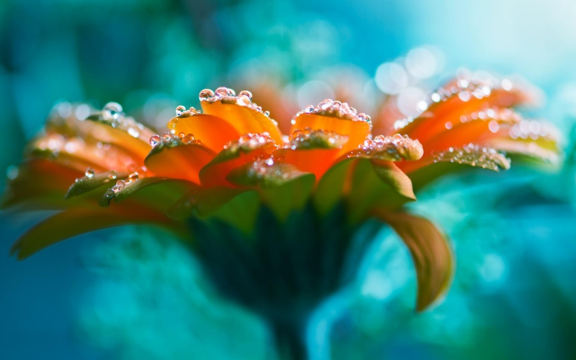 amazing flowers bright