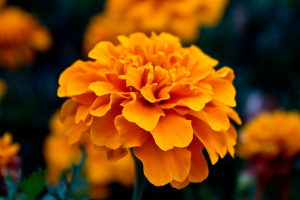 amazing flowers orange