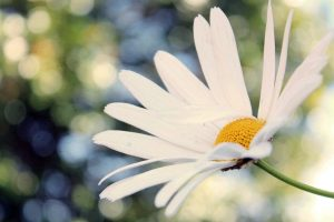 amazing flowers white