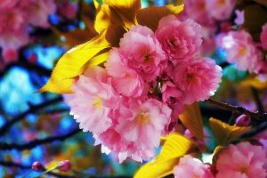 beautiful flower pictures A5