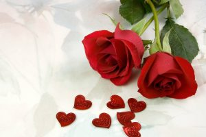 beautiful red roses wallpapers