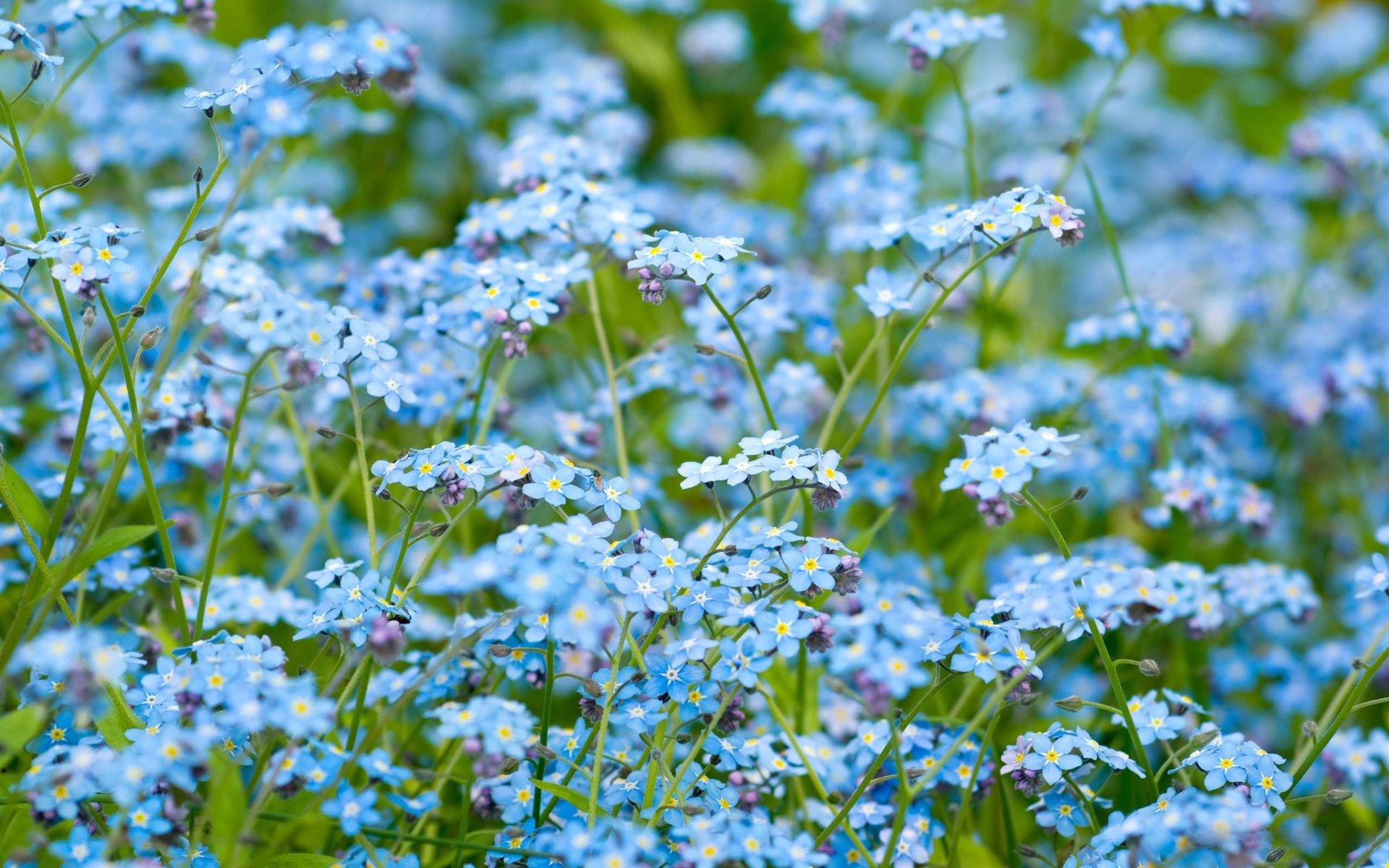 blue flowers cool