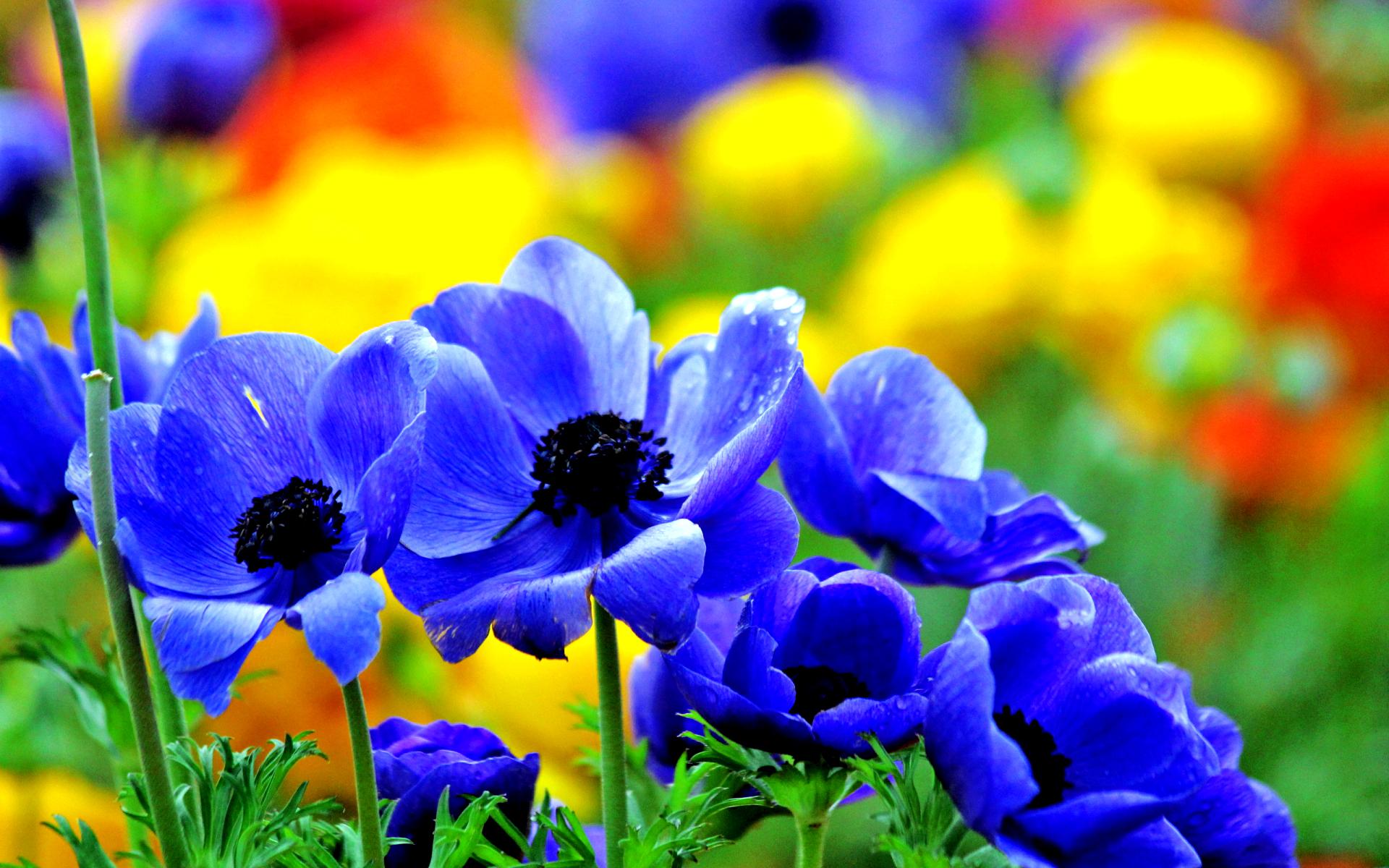 blue flowers vivid - HD Desktop Wallpapers | 4k HD