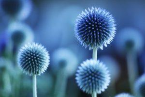 blue flowers wallpaper free