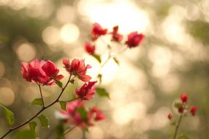 branches leaves flowers pink  nature bokeh