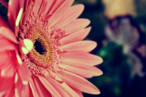 bright flowers pink hd