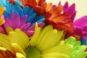 bright flowers rainbow