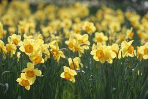 flower landscape background