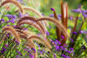flower meadow lovely