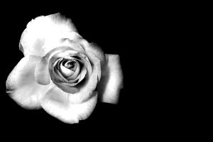 flower photos black and white