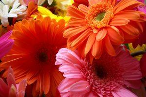 flower wallpaper A3