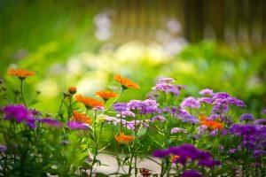 flower wallpaper image