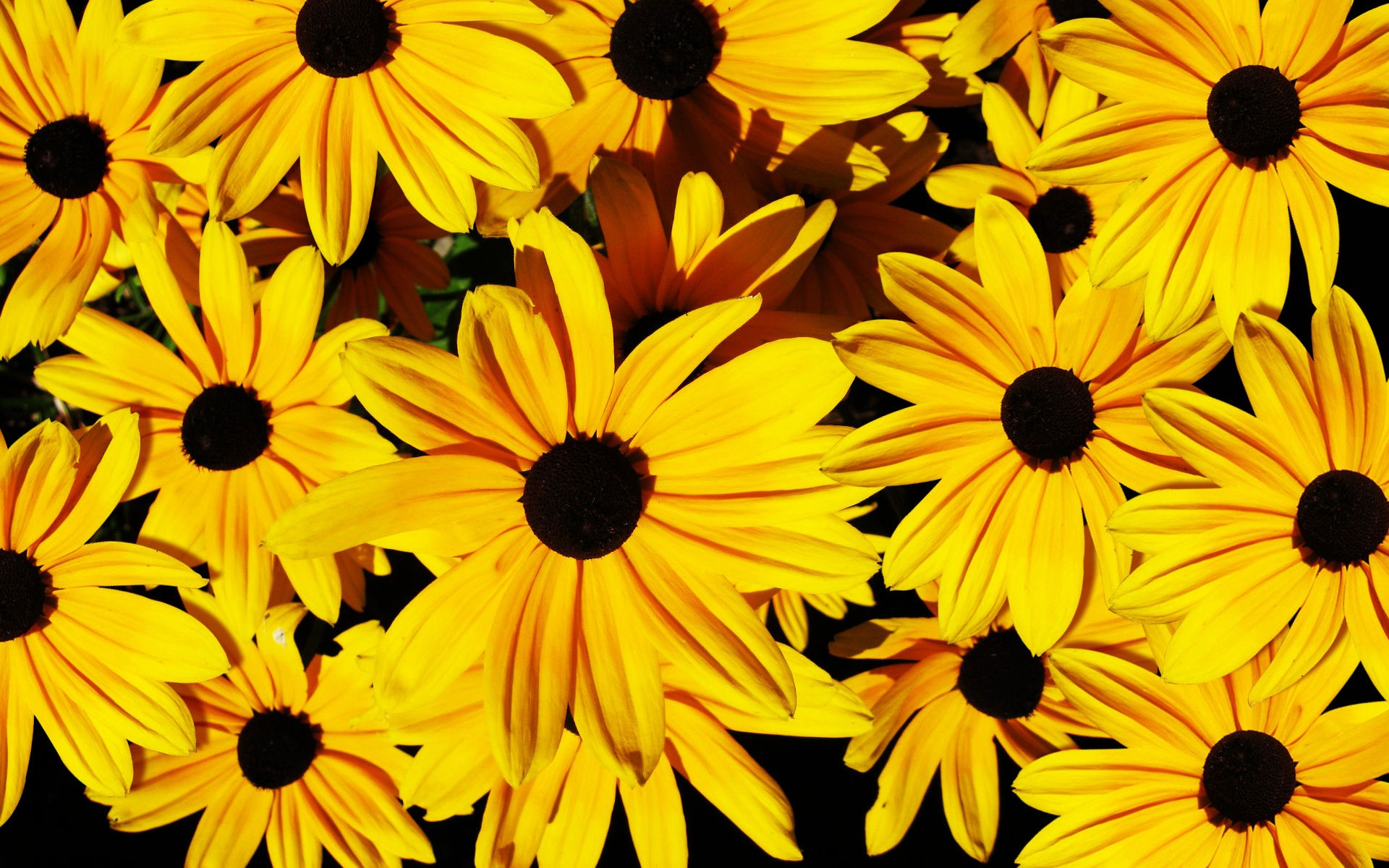 flower wallpaper stunning yellow