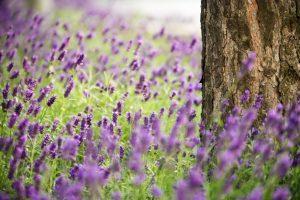 flowers nature tree