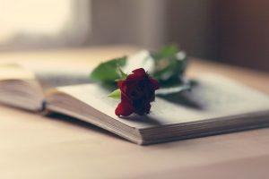 free red rose wallpaper