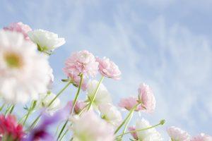 free wildflower wallpapers