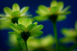 green flowers wallpaper