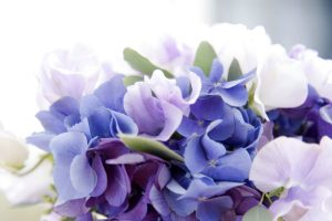 hydrangea backgrounds