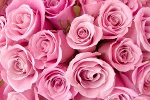 light pink wallpaper A1