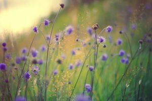 lovely flowers macro