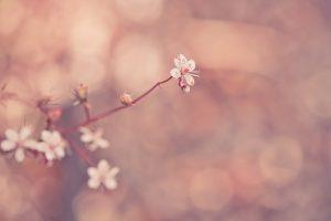 macro flowers 1080p