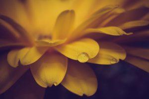macro wallpaper yellow 1080p
