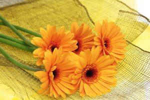 orange flowers beautiful backgrounds