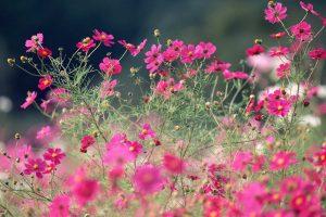 perennial flowers cute