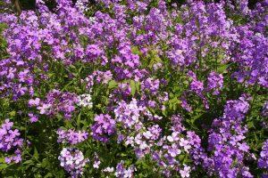 perennial flowers wallpaper A3