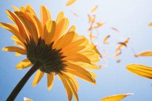 Flower petals floating