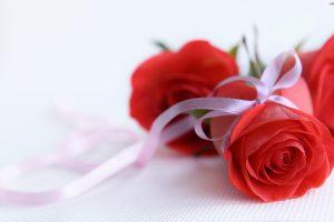 photos of rose flower