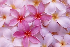 pic of pink flowers