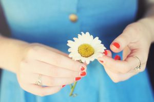 picture of daisy flower