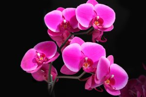 pink flower pic